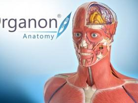 [行业软件]3D Organon人体解剖软件下载,3D Organon Anatomy V3.0.0 便携完整注册版